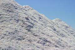 Overzees zout bij zout moeras Royalty-vrije Stock Afbeelding