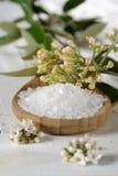 Overzees zout met kruiden Stock Afbeeldingen
