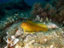 Overzeese †bodem ‹â€ ‹met vissen stock foto