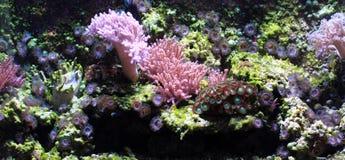overzeese aquariumachtergrond royalty-vrije stock fotografie