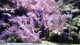 overzeese aquariumachtergrond stock afbeeldingen