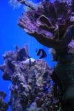 overzeese aquariumachtergrond stock fotografie