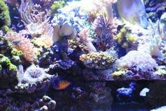overzeese aquariumachtergrond royalty-vrije stock foto