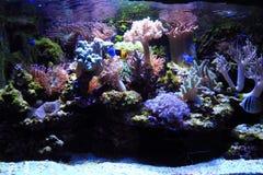 overzeese aquariumachtergrond stock foto
