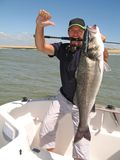 Overzeese baarzen die, vangst van vissen vissen royalty-vrije stock fotografie