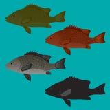 Overzeese Baarzen en Snapper vissenvector Stock Afbeeldingen