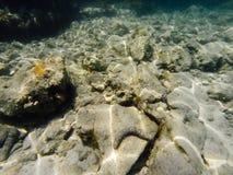 Overzeese bodem met zeewierinstallaties en cockleshell stock afbeeldingen