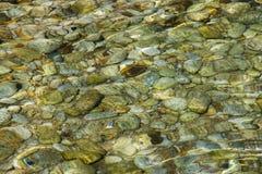 Overzeese bodem met zeewierinstallaties en cockleshell Stock Fotografie