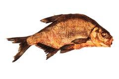 Overzeese brasem gouden vissen stock fotografie