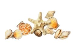 Overzeese die shell en zeestersamenstelling op wit wordt geïsoleerd Stock Fotografie