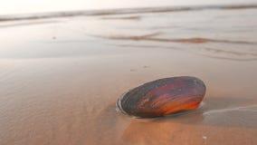 Overzeese die shell op een strand door een zeewater wordt gewassen stock footage