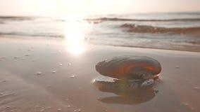 Overzeese die shell op een strand door een zeewater wordt gewassen stock videobeelden