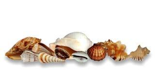 Overzeese die shells inzameling op witte achtergrond wordt ge?soleerd royalty-vrije illustratie