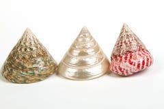 Overzeese die shells op wit wordt geïsoleerdd Stock Foto