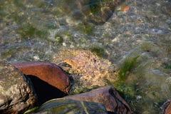 Overzeese die stenenrotsen door overzees golf-zeegezicht worden gewassen royalty-vrije stock afbeelding