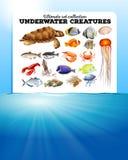 Overzeese dieren en de oceaan Royalty-vrije Stock Fotografie