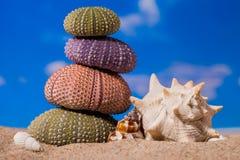 Overzeese Egelshells op zand en blauwe hemelachtergrond Royalty-vrije Stock Foto