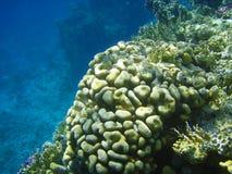 Overzeese fauna en koraal van rode overzees Stock Foto's