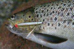 Lokmiddel voor de Overzeese Visserij van de Forel Stock Foto's