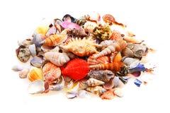 Overzeese geïsoleerdb shells royalty-vrije stock fotografie