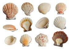 Overzeese geplaatst shells royalty-vrije stock fotografie