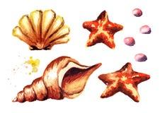 Overzeese geplaatst shells Waterverfhand getrokken die illustratie, op witte achtergrond wordt geïsoleerd stock illustratie