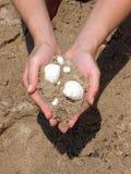 Overzeese gift - shells stock afbeeldingen