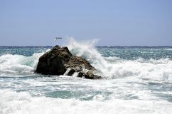 Overzeese golven, een rots en een zeemeeuw Stock Fotografie