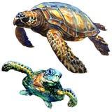 Overzeese groene geïsoleerde schildpad, reeks, waterverfillustratie op wit Stock Foto's