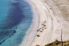 Overzeese honden bij het strand royalty-vrije stock afbeeldingen