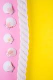 Overzeese kabel en kammosselshells op gekleurde achtergronden met negatief Stock Afbeelding