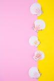 Overzeese kammosselshells op gekleurde achtergronden met negatieve ruimte, t Stock Afbeeldingen