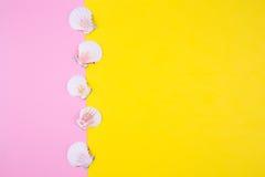 Overzeese kammosselshells op gekleurde achtergronden met negatieve ruimte, t Stock Foto's