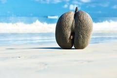 Overzeese kokosnoten (coco DE mer) op strand in Seychellen Royalty-vrije Stock Fotografie