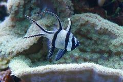Overzeese koralen Royalty-vrije Stock Foto's