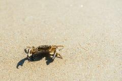 Overzeese krab op strand Stock Afbeeldingen