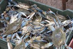 Overzeese krabben op plastic doos Stock Afbeelding