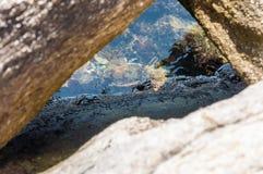Overzeese krabzitting op rotsachtige die stenen door Egeïsch zeewatershoogtepunt worden omringd van het trillende onderwater mari stock foto