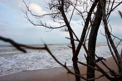 Overzeese kust en bomen Stock Fotografie