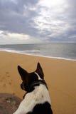 Overzeese kust en hond Royalty-vrije Stock Afbeeldingen