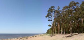 Overzeese kust met pijnbomen en de blauwe hemel Royalty-vrije Stock Foto's