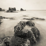 Overzeese kust in monotoon royalty-vrije stock foto's