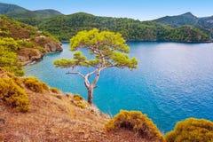 Overzeese kustpijnboom Fethiye Turkije Stock Foto