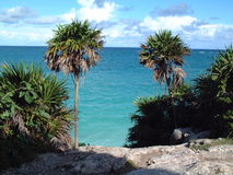 Overzeese mening en palmtrees Tulum Stock Afbeelding