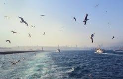 Overzeese mening met zeemeeuwen en schepen in Istanboel Stock Foto's
