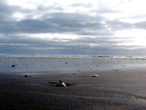 Overzeese nevel Mooi gewaagd strand stock fotografie
