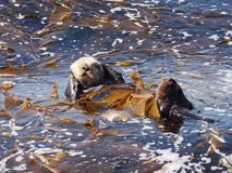 Overzeese Otter Cuteness stock foto's