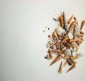overzeese samenstelling met shells Royalty-vrije Stock Afbeelding