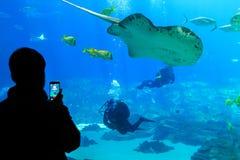 Overzeese schepselen bij het aquarium de V.S. van Georgië met scuba-duikers in tank royalty-vrije stock afbeeldingen