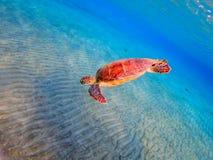 Overzeese schildpad Royalty-vrije Stock Foto